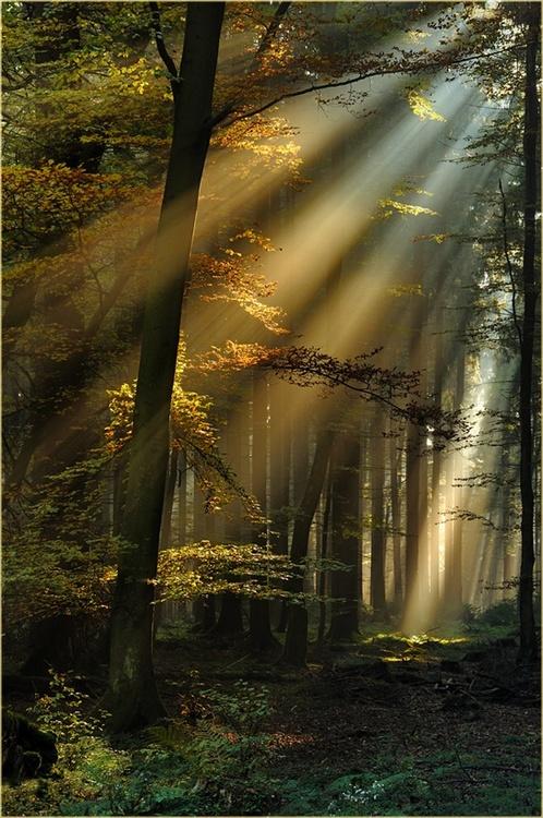 Forêt Noire (Allemagne)