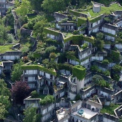 toits verts en ville