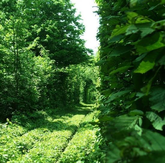 Le Tunnel de l'Amour de Kleven (Ukraine)