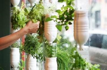 Window farms ou comment faire un potager dans son studio for Au jardin des sans pourquoi