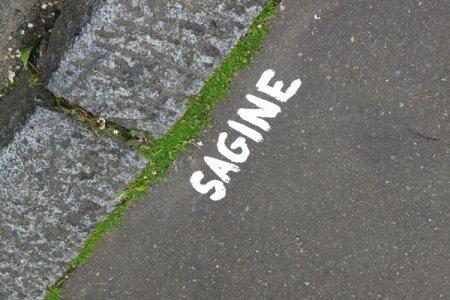 Sagine