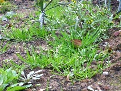 10 façons de traiter les mauvaises herbes naturellement