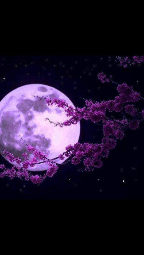 sakura et lune