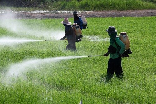 Des pesticides indésirables dans les aliments d'origine extraeuropéenne