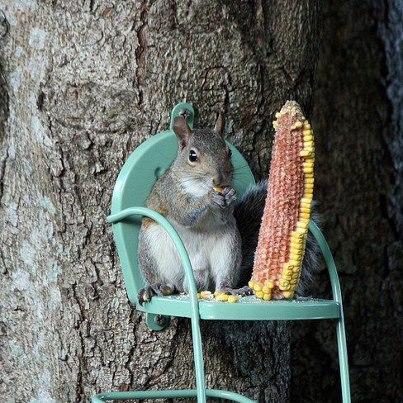 Un écureuil... sur un fauteuil ! :)