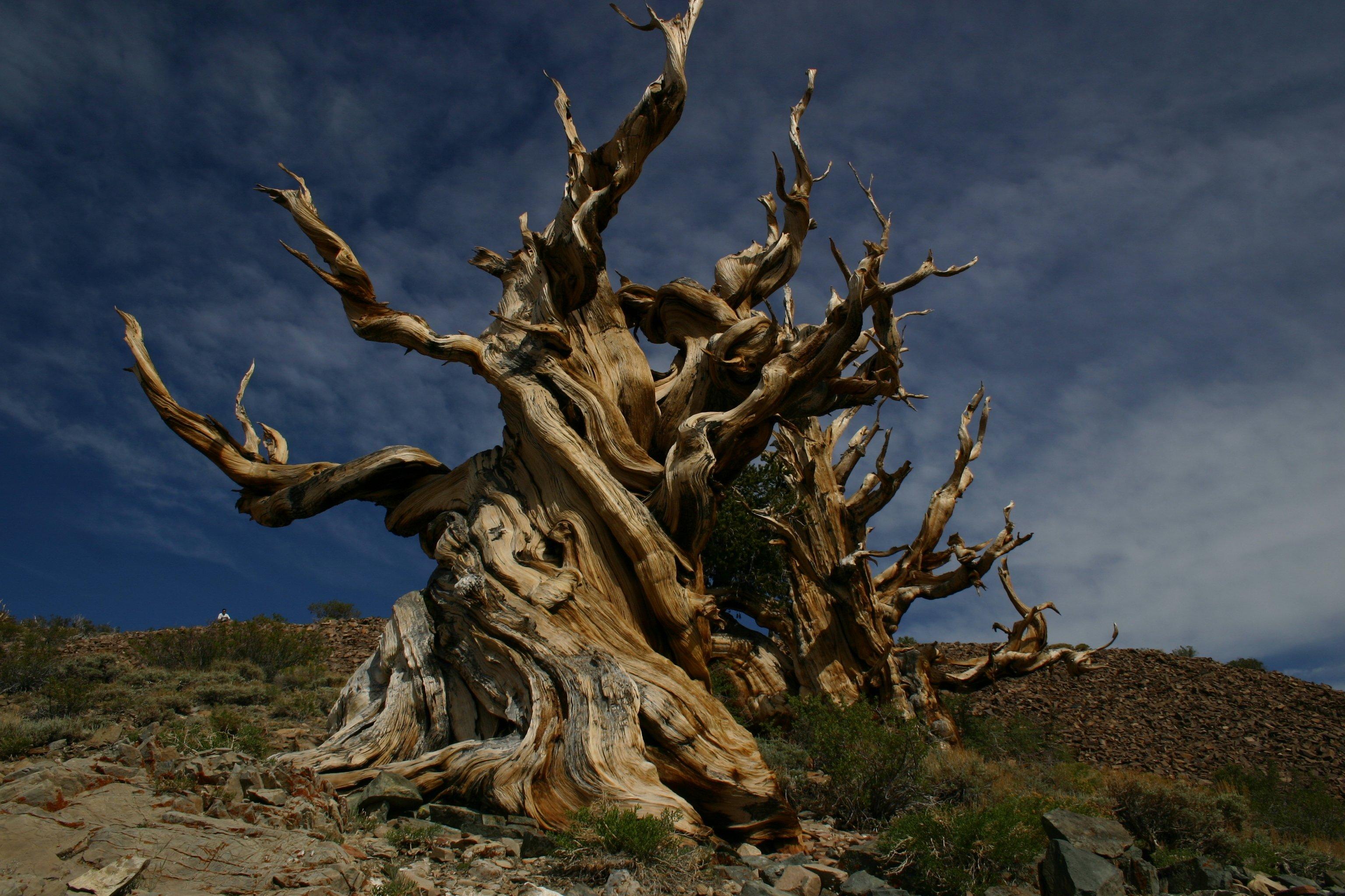 Photo of Les arbres les plus singuliers de la Planète