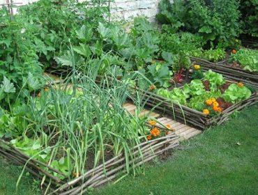 Savon noir liquide : allié du jardinier pour l\'entretien des outils ...