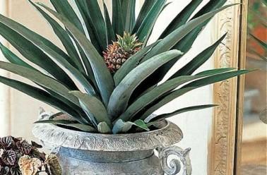 5 fruits et l gumes faire repousser dans sa cuisine - Faire pousser des legumes en interieur ...