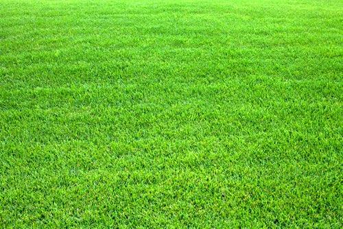 15 conseils pour entretenir une pelouse cologique - Quand planter de la pelouse ...