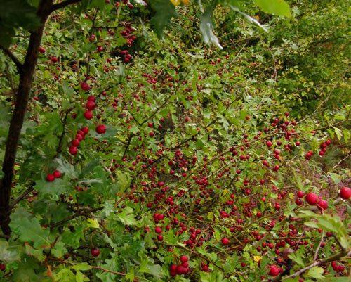 Alimentation : ils ont planté une forêt comestible !
