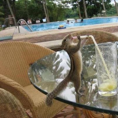L'écureuil intelligent !