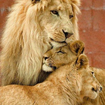 La famille 'Lion'