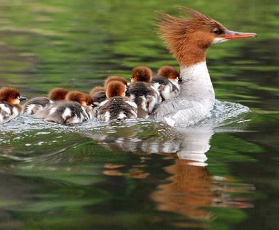 Les merveilles de la nature...
