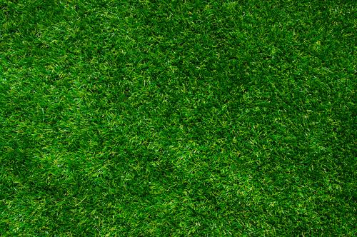 15 conseils pour entretenir une pelouse cologique toutvert. Black Bedroom Furniture Sets. Home Design Ideas