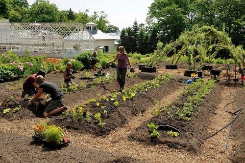 Quand les parcs se transforment en jardins potagers !