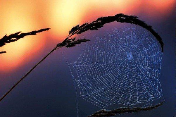 La toile tissée vue au coucher du soleil