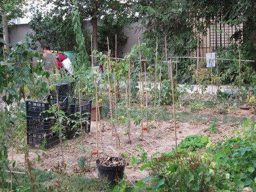 """""""Graine de jardins"""", un réseaux de jardins partagés en Île-de-France"""