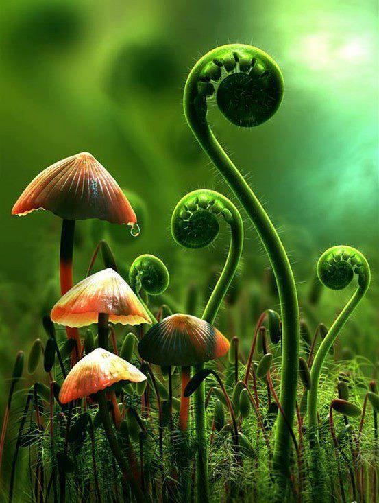 Le champignon magique !