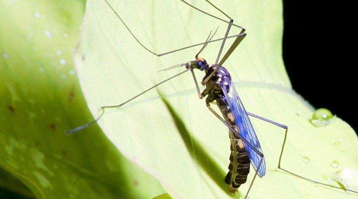 Faso Soap : un savon anti-moustique pour lutter contre le paludisme