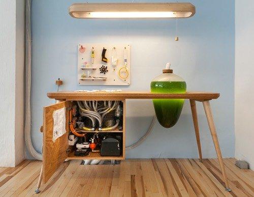 Produire sa propre énergie et sa nourriture grâce à des micro-algues !