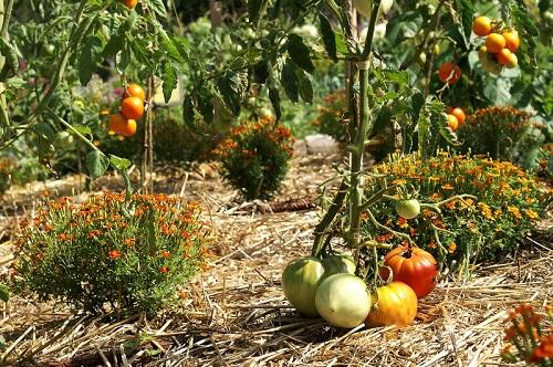 La clé du jardinage biologique : un sol vivant !