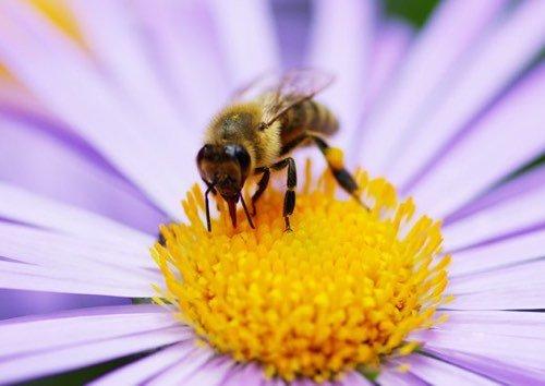 Combien d'années l'homme pourrait-il survivre à la disparition des abeilles ?