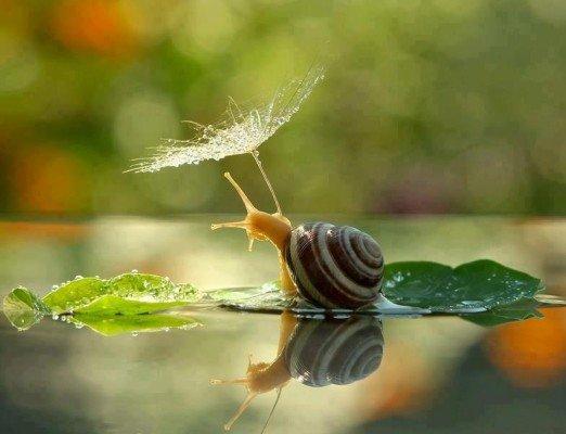 escargot avec parapluie