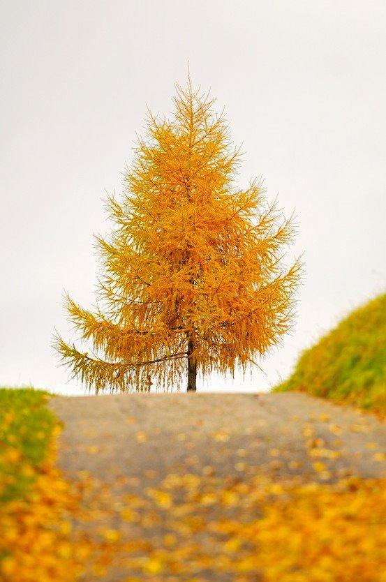 arbre d automne
