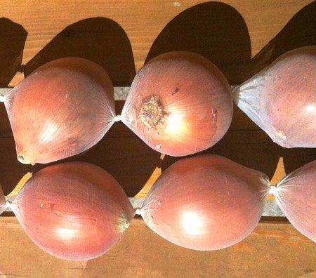 onions-9