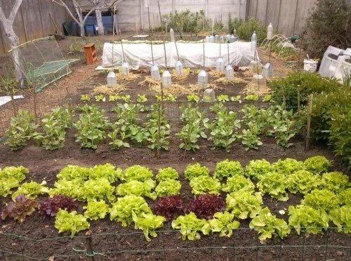 partage de jardin potager