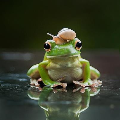 La grenouille et l'escargot...