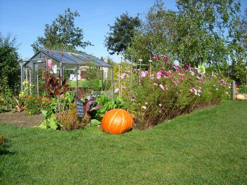 Les travaux d'entretien du jardin en automne