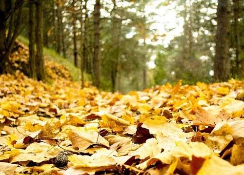 Pourquoi les feuilles tombent elles en automne ?
