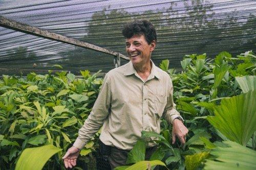 Un palmier à sucre pour sauver la jungle indonésienne