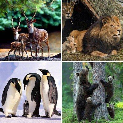 Animaux en famille