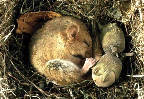 Que se passe-t-il quand un animal hiberne ?