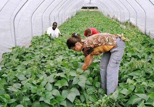 Les Jardins de Cocagne, des jardins éthiques, bio et solidaires