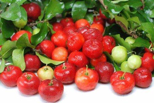 Super aliment : les bienfaits et vertus de l'acérola