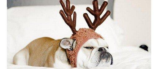A Noel on adopte tous l'esprit festif !