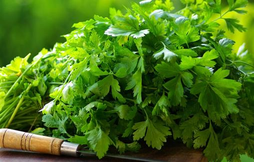 Les bienfaits et vertus de la coriandre pour la santé
