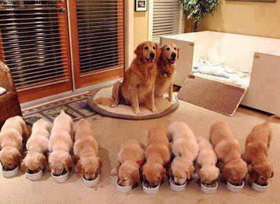 A combien de bouches  faut-il donner à manger ?