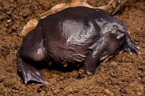 Les 12 animaux les plus surprenants de la planète !