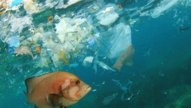 Photo of Pollution des océans : un « 7ème continent » de déchets flotte au large du Pacifique