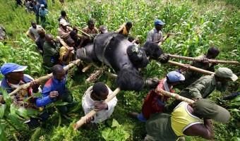 Crime environnemental : commettre l'irréparable ne coûte pas cher et peut rapporter gros