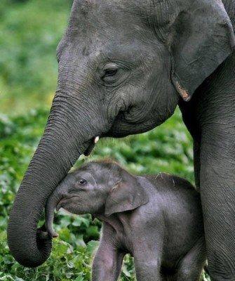 Une maman et son petit !