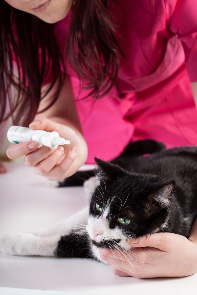 Fabriquez vos lotions naturelles pour chiens et chats