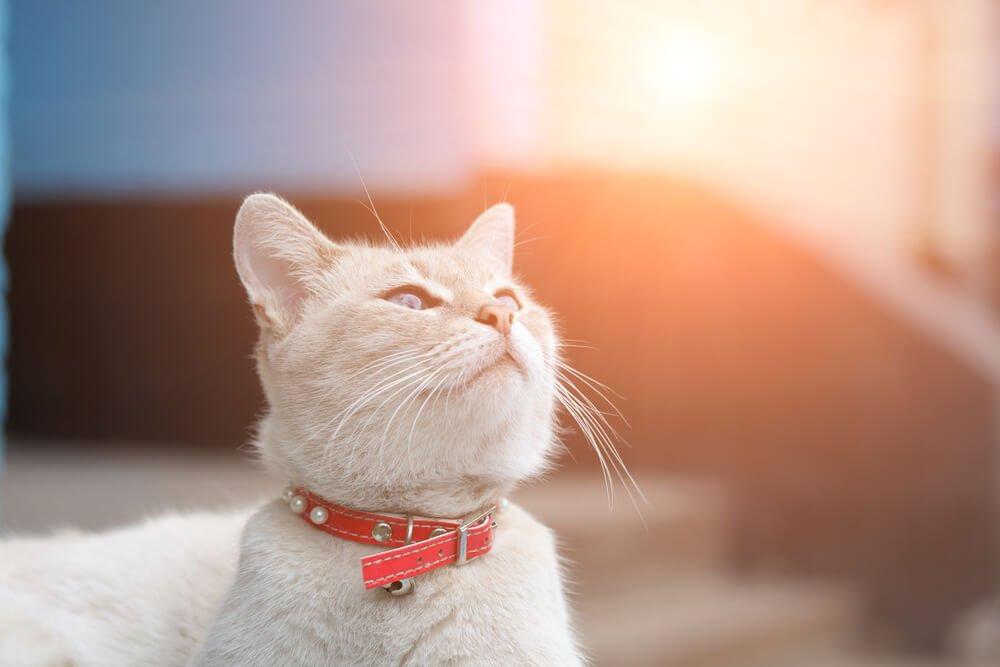 Photo of Fabriquez votre collier répulsif naturel pour chien et chat