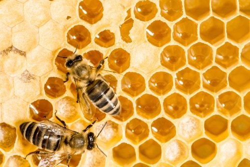 Les multiples usages de la cire d'abeille naturelle !