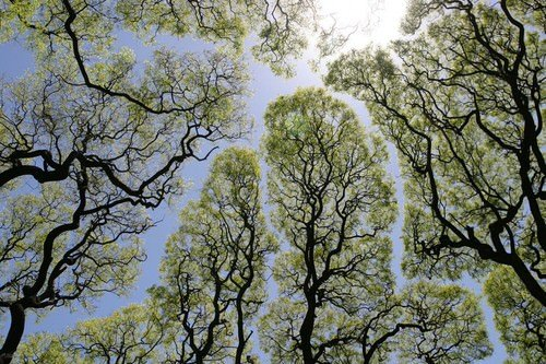 arbre-timide-feuillage-02-1280x853