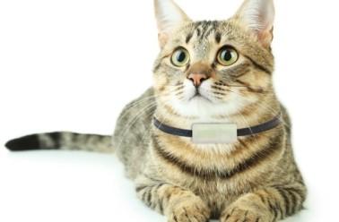 fabriquez votre collier r pulsif naturel pour chien et chat. Black Bedroom Furniture Sets. Home Design Ideas